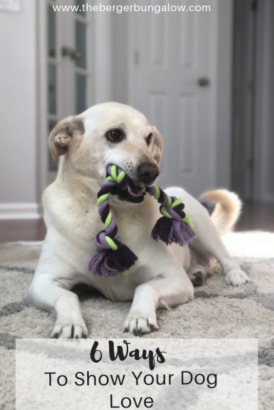 Do you have a new pet? Atlanta-based blogger, Alex, from The Berger Bungalow shares 6 ways to show your dog love.